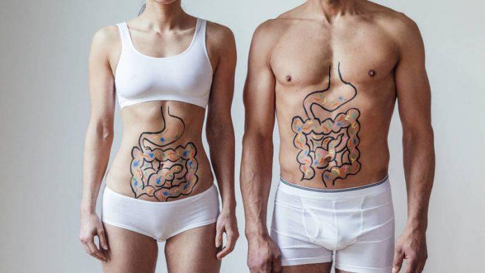 cuerpo intestino